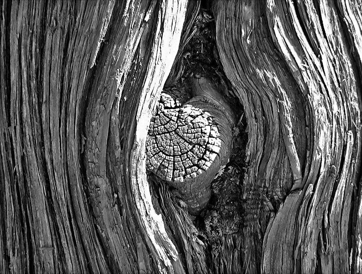 Tree Knot
