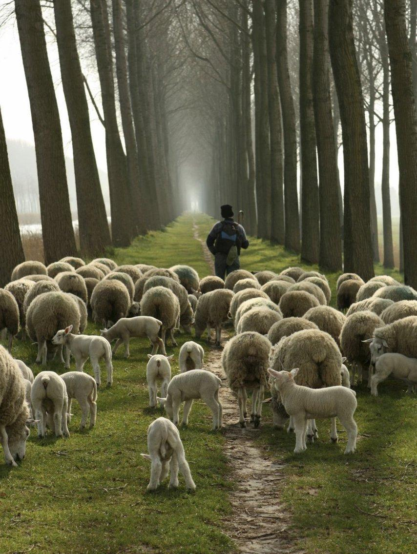 Searching Shepherd2